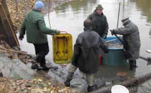 so 12.10.2019 Výlov rybníka v Loučkách s programem