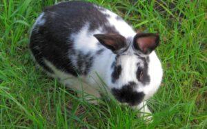 kralik v trave