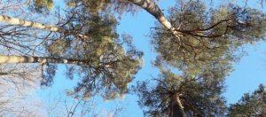 Téma: Lesy a stromy