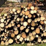 hromada kulatin - dřevo na topení - na zahradě