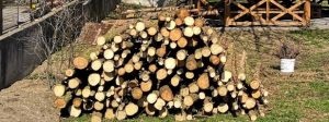 Cenu palivového dřeva z městských lesů určuje starosta, problémové dřeviny jsou za korunu