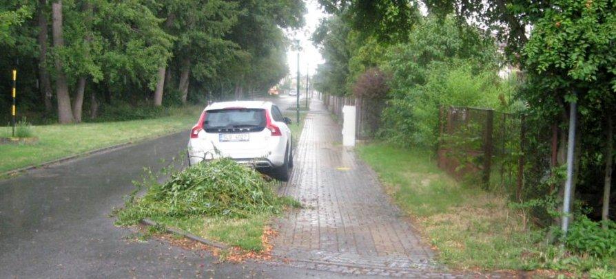 Slatiňany - Škrovádská - ořezané větvě špendlíku zasahujícího do profilu chodníku