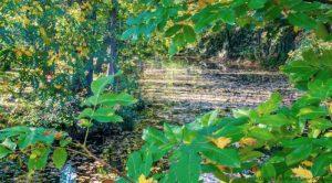 Návrh: Stavba jezírek a rybníků