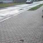 pokálený chodník v Neumannově ulici