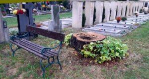 Skácení lip na hřbitově bylo nevyhnutelné, město však nezvládlo komunikaci