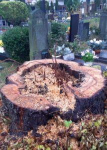 Kácet či nekácet stromy?