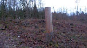 so 16.10.2021 Den za obnovu lesa