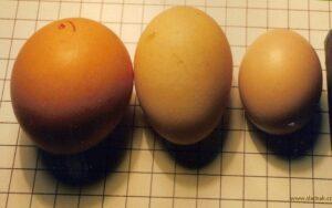 Značení vajec